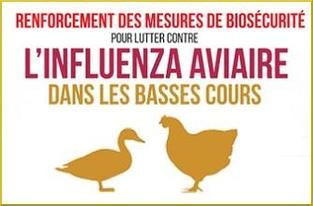 Protection influenza aviaire